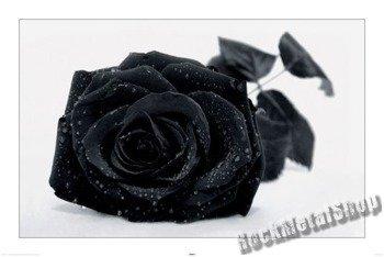 plakat GOTHIC ROSE
