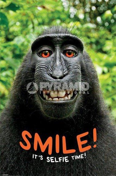 plakat SMILE! IT'S SELFIE TIME - MONKEY